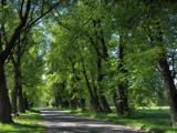 Green roads by ekowalska, photography->landscape gallery