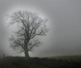 Mistree by biffobear, photography->landscape gallery