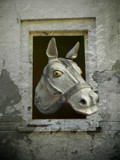 Mister Ed by rvdb, photography->manipulation gallery