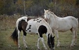 Horses by GIGIBL, photography->animals gallery
