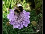 Here's the Buzz ... by LynEve, photography->insects/spiders gallery