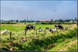 Rural Scene 5 by corngrowth, photography->landscape gallery