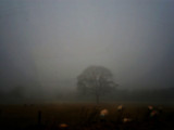 Sheep on a Misty Meadow by biffobear, photography->animals gallery