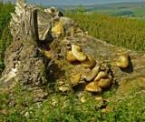 fungi 1 by Lin_O, photography->mushrooms gallery