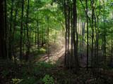The Chosen Spot by casechaser, photography->landscape gallery