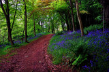 Bluebell Road by biffobear, Photography->Landscape gallery