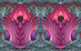 Orchid Straight by Flmngseabass, abstract gallery