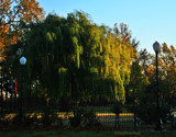 Weeping Willow by billyoneshot, photography->landscape gallery