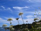 Cliff Walk by ccmerino, Photography->Shorelines gallery