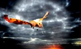 Coming in for a Landing by snapshooter87, photography->manipulation gallery