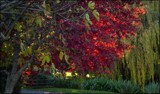 Autumn In The Park #5 by LynEve, photography->landscape gallery