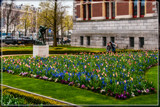 Amsterdam Tulip Festival 03 by corngrowth, photography->flowers gallery