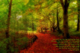 By the first leaves of autumn by biffobear, photography->landscape gallery