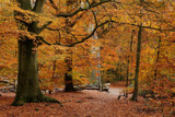 A walk in the forest - part IV by Paul_Gerritsen, Photography->Landscape gallery