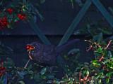 The Juggler by biffobear, Photography->Birds gallery