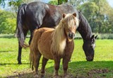 Horse & Pony by WTFlack, photography->animals gallery