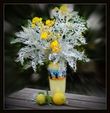 Dusty Miller by LynEve, photography->still life gallery