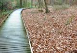 Leaf Bridge by Mvillian, Photography->Landscape gallery