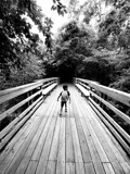 Into the Canopy by sitagirl02, photography->bridges gallery