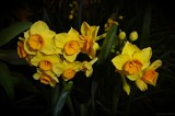 It Might As Well Be Spring by LynEve, photography->flowers gallery
