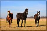 Missouri Dreaming 2 by Jimbobedsel, Photography->Animals gallery