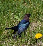 Glistening by Pistos, photography->birds gallery