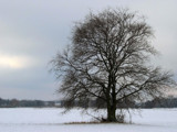 landscape with a tree by ekowalska, Photography->Landscape gallery