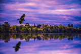 Hawk Fly By by stylo, photography->manipulation gallery