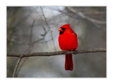 Crimson by gerryp, Photography->Birds gallery