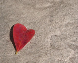 lonely heart by jhunts5, Photography->Nature gallery