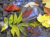 Ashleaf by jsnaher, photography->nature gallery
