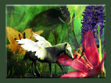 Fauna & Flora by ladyprariefire, Photography->Manipulation gallery