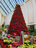 Poinsettia Christmas Tree by Pistos, photography->general gallery