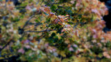 Autumn Impressions by braces, photography->nature gallery