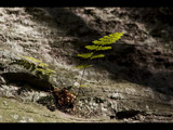 wee fern nestling amongst the rocks by jzaw, Photography->Nature gallery