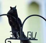 Welcome? Not! by tigger3, photography->animals gallery
