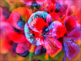 In a Magic Garden by LynEve, photography->manipulation gallery