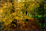 Autumnal Forest by corngrowth, photography->nature gallery