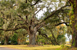 Mossy Oaks by allisontaylor, photography->landscape gallery