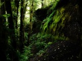 Ancient Fossil Forest by mayne, photography->landscape gallery