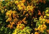 Already by biffobear, photography->nature gallery