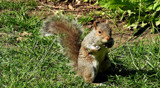 Psst! You Want Nuts? - I Got Nuts! by braces, photography->animals gallery