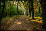 Autumnal 'Canopy' by corngrowth, photography->landscape gallery