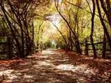 Fall Path by suitsandshoes, Photography->Landscape gallery