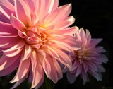 Side By Side by LynEve, photography->flowers gallery