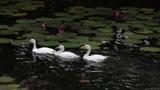 !!! follow me !!! by bijantalukdar, photography->birds gallery