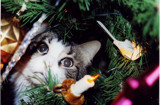 Not the ornament I was looking for. by robtrapp47, Photography->Pets gallery