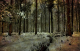 Dusk in the Blagdon wood by biffobear, photography->textures gallery