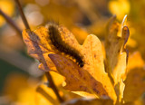 Autumn Glow by slybri, Photography->Insects/Spiders gallery