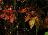 When Autumn Leaves by biffobear, photography->nature gallery